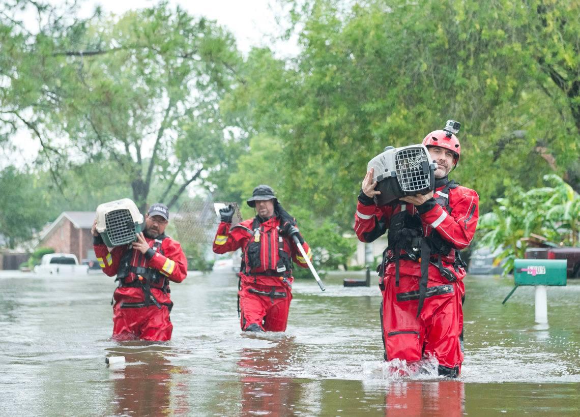 The Animal Evac Trust  image 2