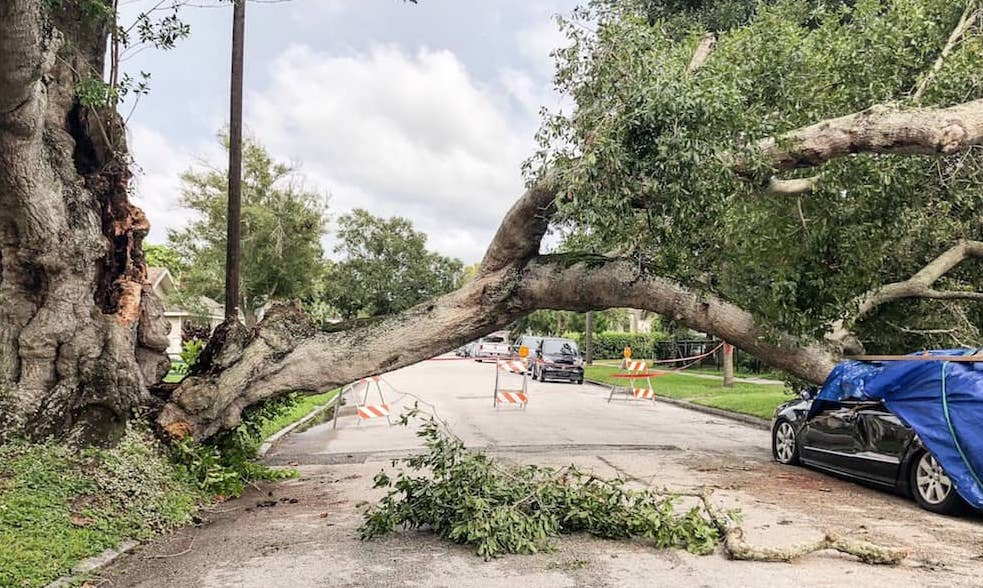Xlooking down the street at a damaged tree from a h rxjlc5x 1 1.jpg.pagespeed.ic.4IQgK 07eh
